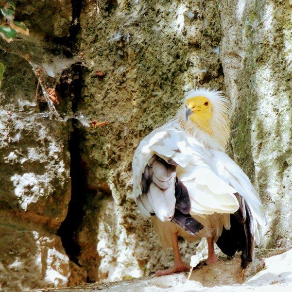Vogelpark in Villars des Dombes