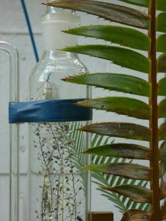 Pinetum als lab