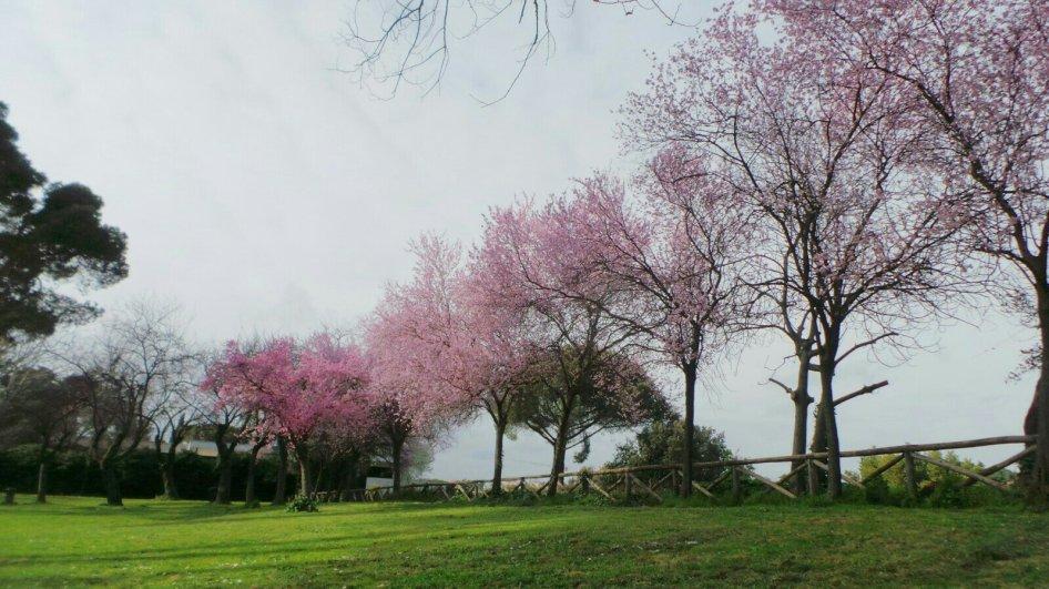 Park bij Vila Borghese