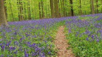 Dit voorjaar in Halle in Belgie