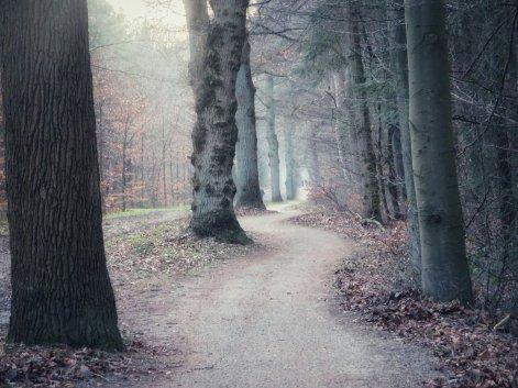 Bos bij Hilversum